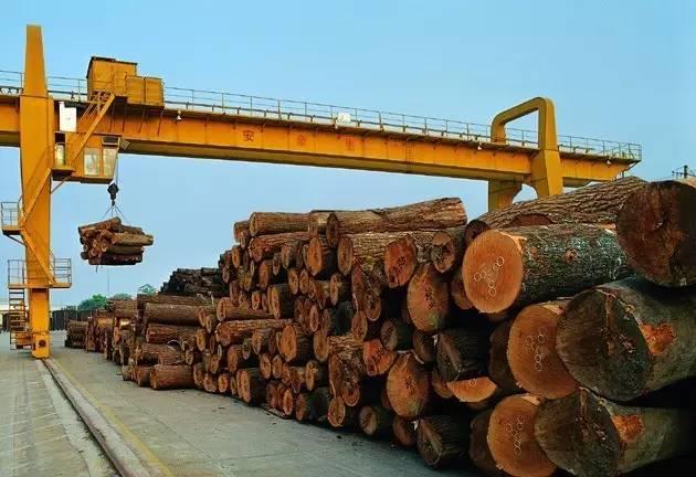 木材基地.jpg